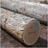Cords of Oak Firewood For Sale