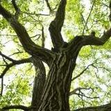 Cords of Walnut Firewood