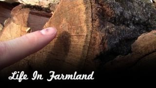 How To Identify Oak Firewood - Cords of Firewood For Sale