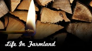 Helpful Tips For Wet And Damp Firewood - Cords Of Wood